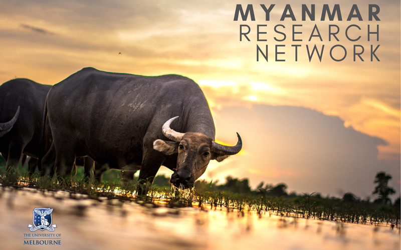 A buffalo in a field