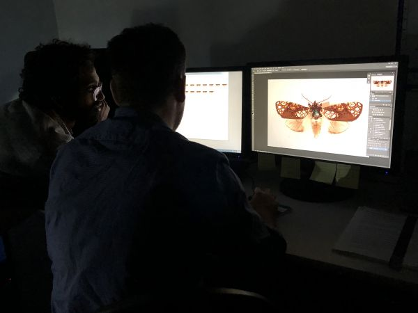 Nish Nizar and Heath Warwick of Museums Victoria compiling layered photographs of Dugeonea actinias for a single image of the specimen